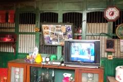 Shrine, photos, TV, clock